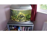 Rena curved bow front fish tank