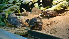 Free Turtle Exhibition & Garden Party