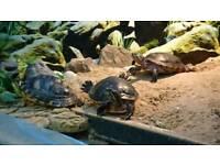 Free Turtle Exhibition & Garden Party