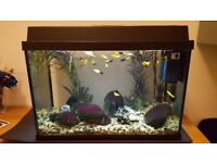 Fish tank with filters, heater, gravel, light, foam mat, net and fish.