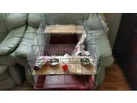 good condition hamster or rabbit any small pets