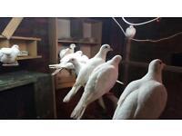 Birds java