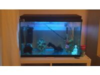 Fish tank with everything including fish