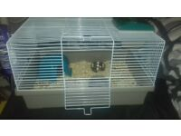 Two male rats for 35 very freindly come with cage and food and bedding