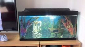 FISH TANK - incl Decor,fishes,filter,heater and lighting