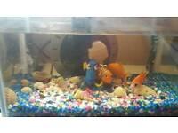 Finding nemo fish tank