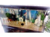 Complete setup- 3 foot fish tank