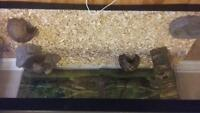 Huge 40 Gallon Tank With All Accessories