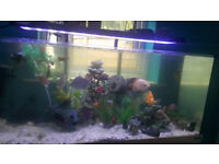4 Foot Fish tank with cabenet and stock