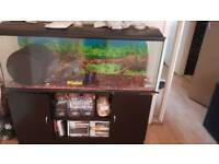 4ft Fish tank with filter