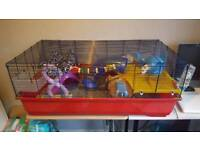 Female Rats and Cage
