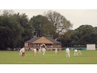 Newdigate Cricket Club - Players Wanted
