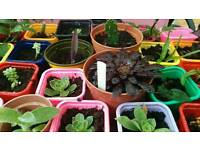 Fundraising 100 easy to care for house plants sell all day long for a £1.00 each
