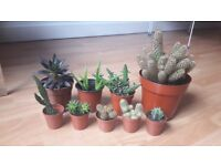 Cactus and succulent plants (buy all together or separately)