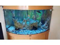 Jewel fish tank 190l corner