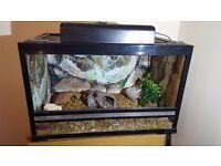 2.5ft Vivarium & Accessories - For Reptiles - Amazing Christmas Gift!