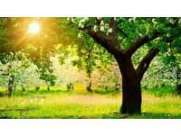 Affordable garden maintenance services