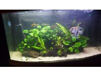 180 liter jewel bow front aquarium