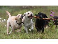 Happy Trails Dog Walking Service