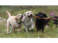 Happy Trails Dog Walking Service