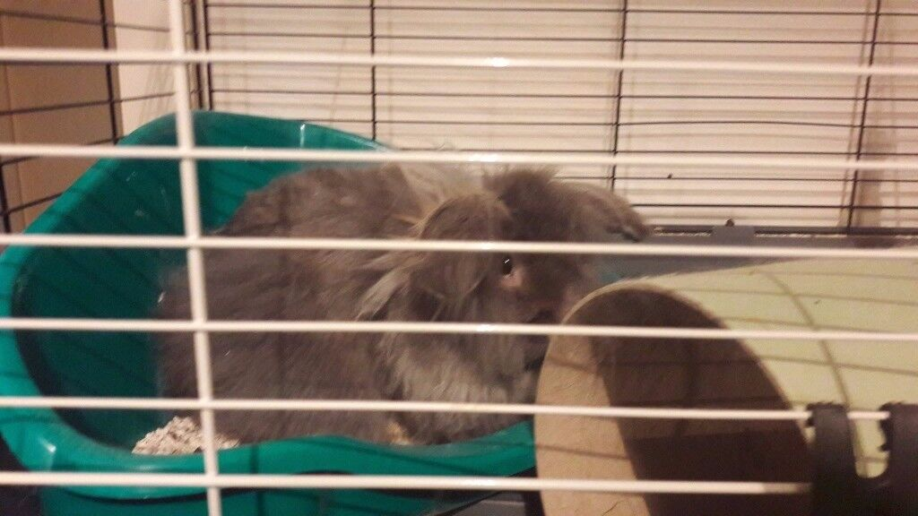 2 Very Fluffy Rabbits For Sale