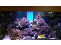 Marine fish tank in oak unit with sump