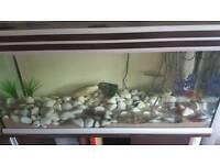 Fishtank 3ft