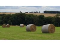 15 ROUND HAY BALES - BALED 3 WEEKS AGO - GOOD FOR LIVESTOCK