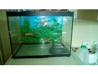 Full fish tank with filter