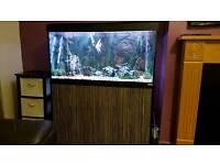 Fish aquarium set