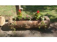 Tree trunk/log planter REAL