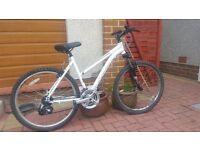 Adult Ridgeback mountain bike
