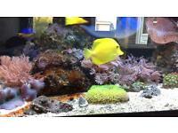MARINE FISH TANK FULL SETUP