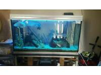 Rena 4ftx2ftx2ft tank including everything