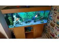 Jewel rio fish tank 250ltr and cabinet(full setup)