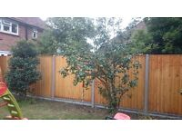 gardening fencing paving turfing decking planting irrigation garden clearance