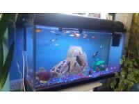 3 foot fish tank plus sub tropical fish