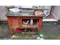 Rabbit hutch with run attached underneath , in used condition :)