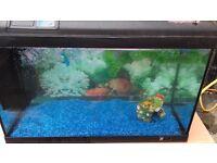 2foot tropical fish tank