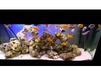 Fluval Roma 240ltr fish tank aquarium