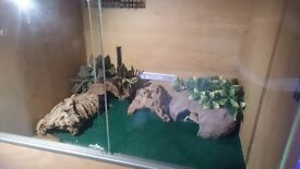 Vivarium and 4 Leopard Geckos