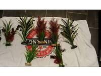 Aquarium plants and ornament