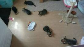 5 kittens for sale ready now