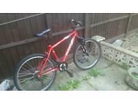 Apollo slant bike