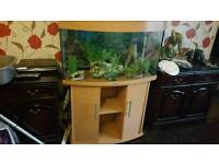 Jewel 180 fish tank and cabinet