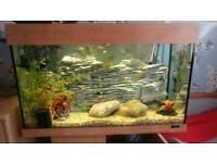 Juwel large tropical fish tank