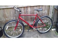 ADULT RALEIGH Max Men's bike /FREE DELIVERY WITHIN 3 MILES OR LITTLE EXTRA COST FOR EXTRA MILES
