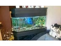 Large corner fish tank
