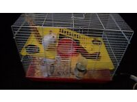 Hamster with 2 cages and all accessories