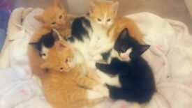 Beautiful Kittens Looking for Forever Homes!